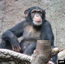 """""""Maymunlar Cehenneminin Doğuşu"""" Sinemalarda"""