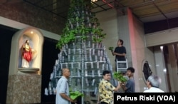 Sejumlah umat Paroki Kristus Raja yang tergabung dalam komunitas urban farming menyusun aneka jenis sayuran hidroponik sebagai pohon Natal. (Foto: Petrus Riski/VOA)
