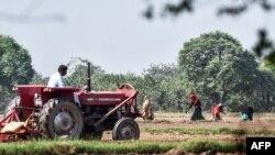ماہرینِ اجناس کے مطابق اعدادو شمار ظاہر کرتے ہیں کہ پاکستان سے غذائی اشیا کی برآمدات میں نہ صرف کمی واقع ہو رہی ہے بلکہ زرعی ملک ہونے کے باوجود اس کی اس شعبے میں درآمدات بڑھ رہی ہے جو واقعتاً خطرے کی بات ہے۔