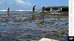 Pescado não chega. Pescadores e focas em concorrencia