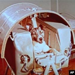 """1957年11月,苏联发射的""""卫星二号""""上带了个特殊的乘客,一只名叫莱卡的狗"""