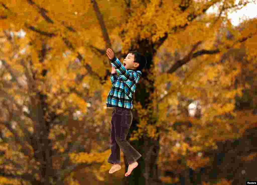 A six-year-old boy plays in front of yellow ginkgo leaves at a park in Tokyo, Japan.