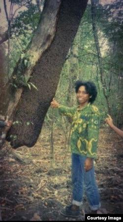 Sarang lebah dorsata di pohon sialang di hutan Jambi (foto: courtesy).