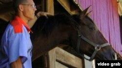 Algunos de los equinos en manos de las autoridades Federales han muerto y han enfermado.