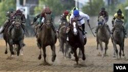 Shackleford conducido por Jesús Castanón en azul y blanco, defiende la primera posición en los últimos metros ante el ataque de Animal Kingdom en la definión de la edución 136 del Preakness Stakes.