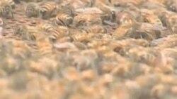 Retki uvid u biljne vrste u opasnosti