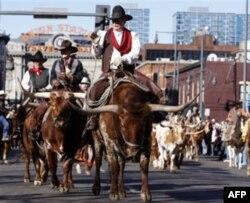 Texas xalqi qishloq xo'jaligi va ayniqsa zotdor qoramoli bilan faxrlanadi.
