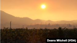 The sun rises over an abandoned vineyard in Sonoma County, California, Oct. 12, 2017, as wildfires continue to spread throughout the region.