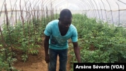 Un jeune agriculteur de Gantsou, à 45 km de Brazzaville, le 12 février 2019. (VOA/Arsène Séverin)