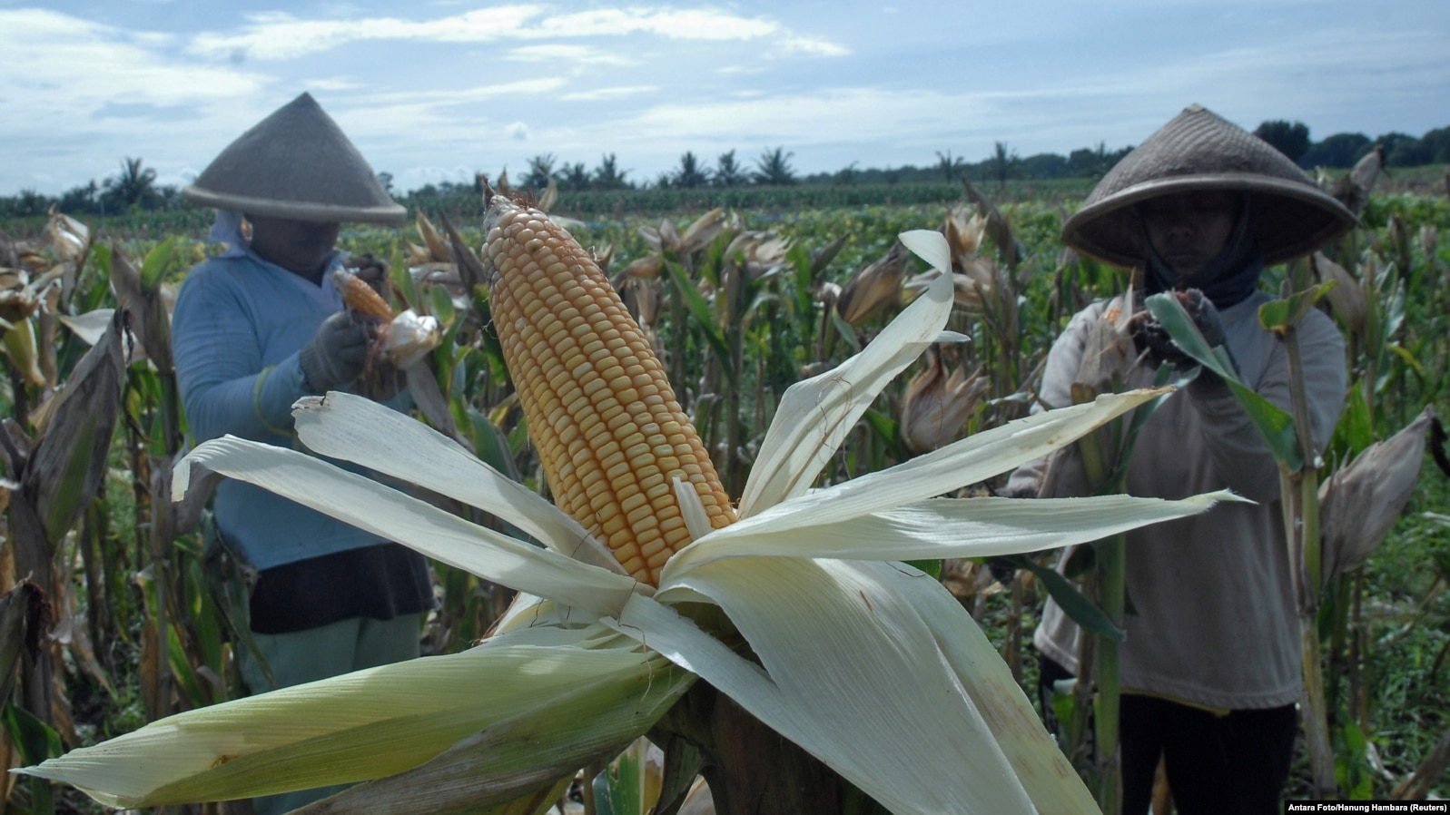 Indonesia Food Sovereignty Remains Elusive