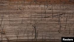 지난 11일 베네수엘라 볼리바르 주 구리 댐이 가뭄으로 말라 수면 아래 잠겨있던 나무와 댐 바닥이 드러났다. (자료사진)
