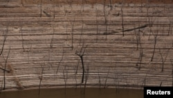 FILE - Trees and water marks are seen on previously submerged land at Guri dam in Bolivar state, Venezuela, April 11, 2016.