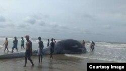 Mandarmani Beach Dead Whale