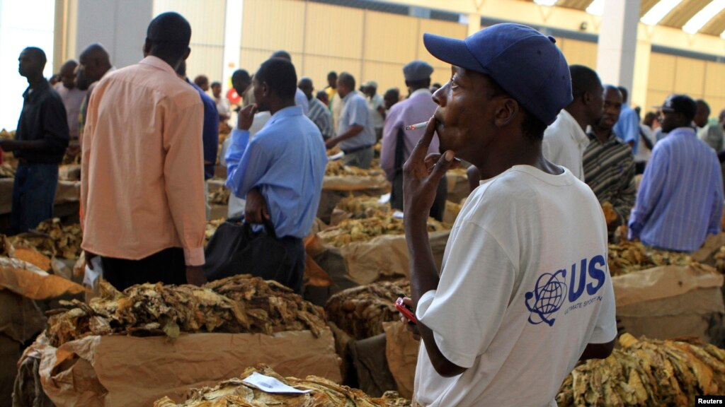 Zimbabwe Tobacco Booming But Farmers Growing It Are Suffering