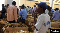 FILE - A worker smokes a cigarette at the opening of the 2012 selling season at Zimbabwe's Boka Tobacco Sales Floor in Harare.