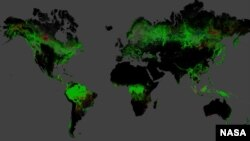 Una fotografía de la NASA ayuda a comprender mejor el estado de los bosques del planeta.