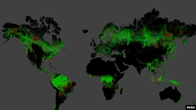 Using Landsat imagery and cloud computing, researchers mapped forest cover worldwide as well as forest loss and gain.