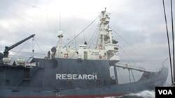 Kapal pemburu ikan paus milik Jepang tengah beroperasi di selatan Lautan Antarctica, Desember 2009.