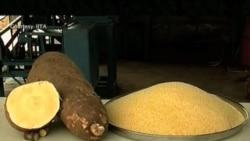 Vitamin A-enhanced Cassava Fights Malnutrition