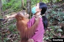 Drh. Citrakasih Nente, Kepala Divisi Konservasi Eks-Situ Sumatran Orangutan Conservation Programme (SOCP)