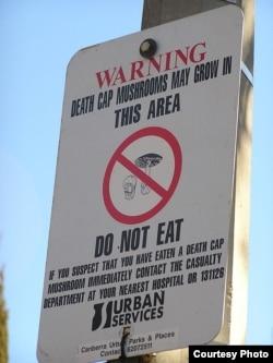 Death Cap mushroom warning sign