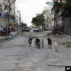 Goats walk down a Mogadishu street in front of bullet-scarred building