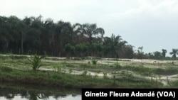 Fermes aquacoles dans lesquelles s'investissent beaucoup de jeunes pour contrer le chômage au Bénin, le 1er juin 2018. (VOA/Ginette Fleure Adandé)