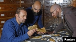 Paleontologist Cristiano Dal Sasso, left, and co-authors Simone Maganuco and Andrea Cau, right, examine the bones of the Jurassic dinosaur Saltriovenator zanellai at the Natural History Museum of Milan, in this undated photo obtained by Reuters Dec. 18, 2018.