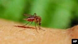 馬來西亞進行轉基因蚊子防登革熱實驗