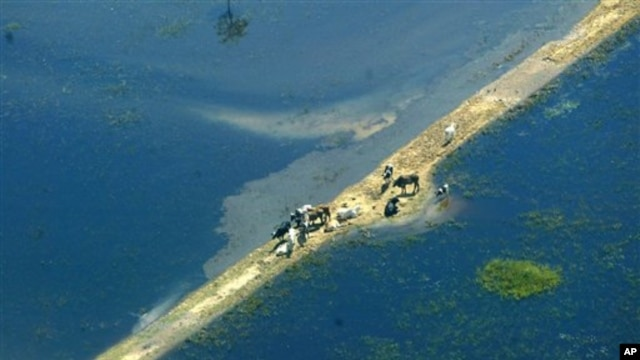 Banjir parah di Bolivia pada 2007 yang dipicu fenomena cuaca El Nino, menewaskan 35 orang dan berdampak pada 70.000 keluarga. (AP/Juan Karita)