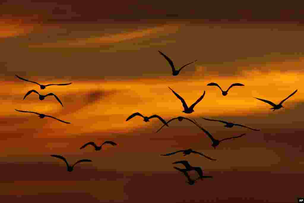 Birds fly while the sun sets in Philadelphia, Pennsylvania, USA.