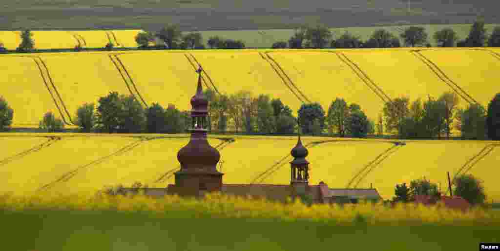 A church is surrounded by blossoming fields of oilseed rape at the village of Strupcice, near the city of Most, Czech Republic.
