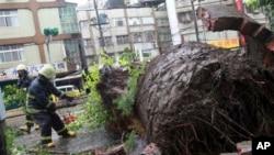 태풍이 지나간 타이완 타이페이시에서 13일 경찰관이 바람에 쓰러진 나무를 제거하고 있다