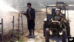 지난 2000년 판문점 인근 한국 파주시에서 구제역이 발생한 가운데 한 주민이 축사 주변에 살균제를 뿌리고 있다. (자료사진)