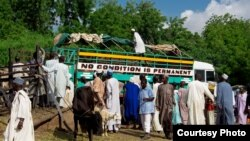 A busy day at Maiduguri's cattle market, and a truck with an apt description. (Fati Abubakar)