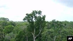 Brasil está distante de se tornar um país em desenvolvimento sustentável, dizem especialistas