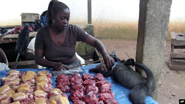 Poachers sell their produce at bush markets like this one in Gabon, where the trader is  displaying bush pigs, duikers, and monkeys for sale (December 2007 file photo)