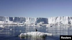 Un pingüino reposa momentáneamente sobre un trozo de hielo que se derrite en el este del Antártico.