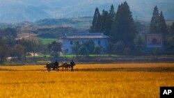 지난 2011년 10월 북한 원산의 한 협동농장. (자료사진)