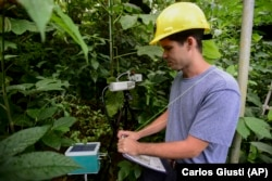 In this February 13, 2019 photo, project technician Robert Tunison collects plant physiology data inside the El Yunque tropical rainforest, in Rio Grande, Puerto Rico.