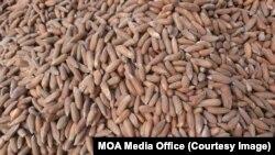 L'arachide, un pilier de l'économie du Sénégal