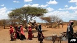 Nạn hạn hán nghiêm trọng tại Somalia đã làm tê liệt lãnh vực nông nghiệp cả nước