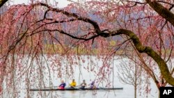 Rowers skim the Potomac River in Washington, Wednesday, March 28, 2018, framed by the emerging blossoms of a weeping cherry tree. The National Park Service has updated its peak bloom forecast for April 8 through April 12, 2018.