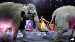 大象最後一場演出
