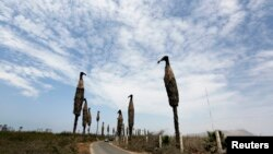 "Instalasi seni ""Burung Nazar Hitam"" karya seniman Cristina Planas berjajar di jalan di Villa Wetlands, daerah yang dilindungi di Lima, Peru (5/12). (Reuters/Mariana Bazo)"