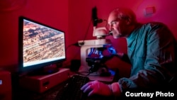 Bill Keevil, a microbiologist at Southampton University in England, investigates the pathogen-destroying properties of copper metal. (Credit: University of Southampton)