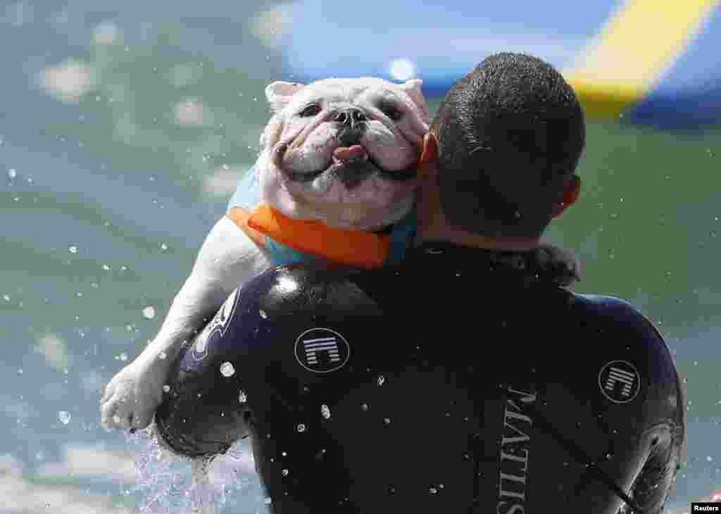 미국 캘리포니아주 헌팅턴비치에서 제 6회 개 서핑대회가 열렸다.