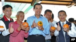 马英九总统在台中农村了解柿子产销情况