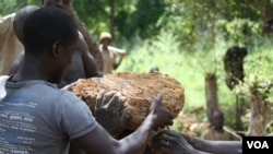 Miners prepare to transport a particularly large rock containing gold ore, Oct. 2012.