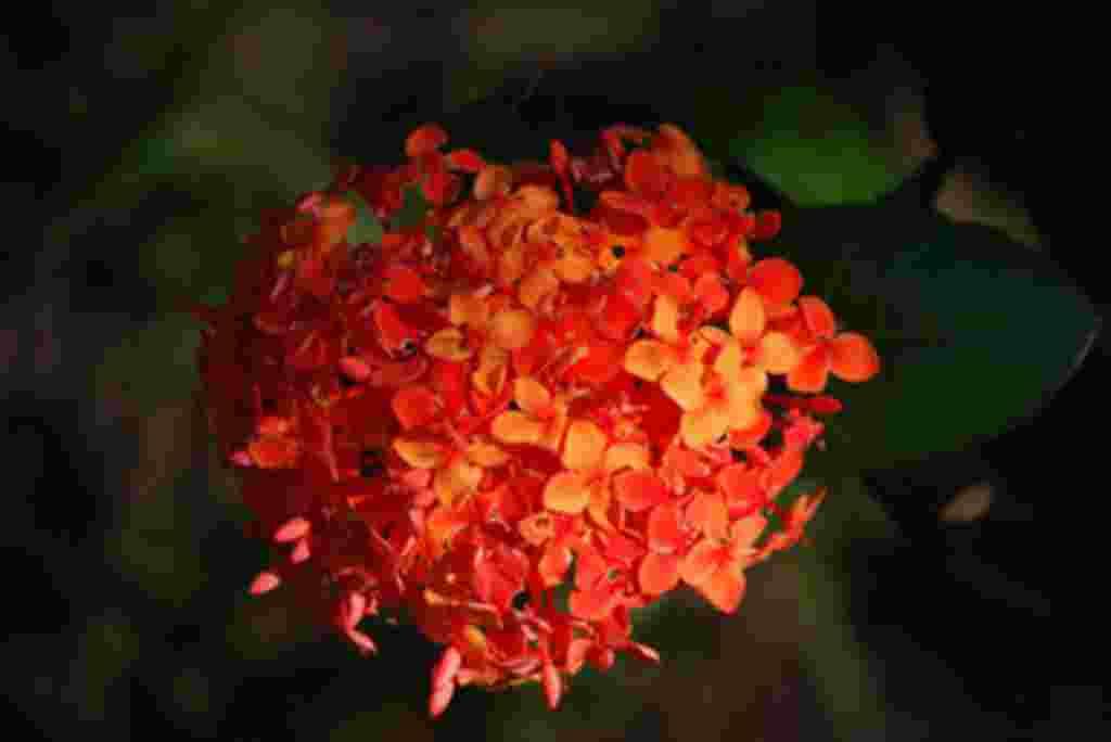 گلهای کاستاریکا / عکاس: بهروز نیکذات